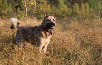 Šunų giminės medis: jame užkoduota ne tik kilmė, bet ir ligos