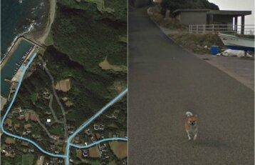 """Išdykęs šunelis tapo žvaigžde: """"Street View"""" automobilio gaudynės kelia juoką"""