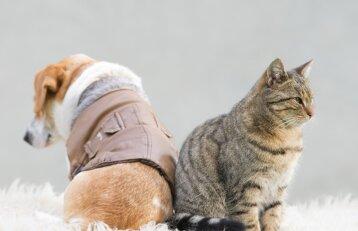 Šunų ir kačių šeimininkų atmintinė: ką svarbiausia žinoti?