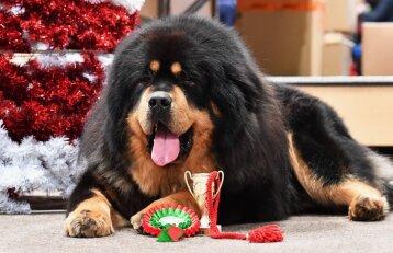 Šunų paroda – su karališko grožio šunimis