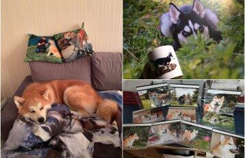 """Dėl gyvūnų eina iš proto: pažiūrėkite, kaip šunys ir katės """"užvaldo"""" šeimininkų namus"""