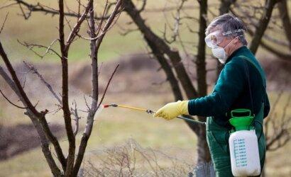 Specialistė įvertino lietuvių nuolat siūlomą erkių naikinimo būdą: nedėkite jokių vilčių