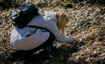 Kartu su žibutėmis prabunda mirtinas pavojus: eidami į gamtą pasisaugokite