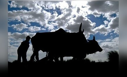 svorio netekimas bulių bulių