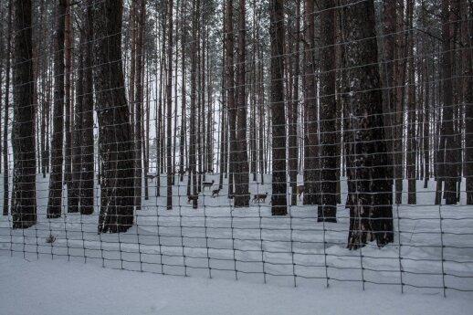 Lietuvos vieta, kurioje per dešimtmetį bažnyčia degė net du kartus