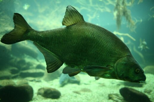 Žuvininko patirtis: kodėl verta pagalvoti apie įžuvinimą žiemą?