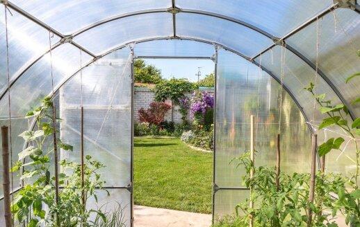 Šiltnamis pavasarį: karkaso valymas ir tinkamų augalams sąlygų sukūrimas
