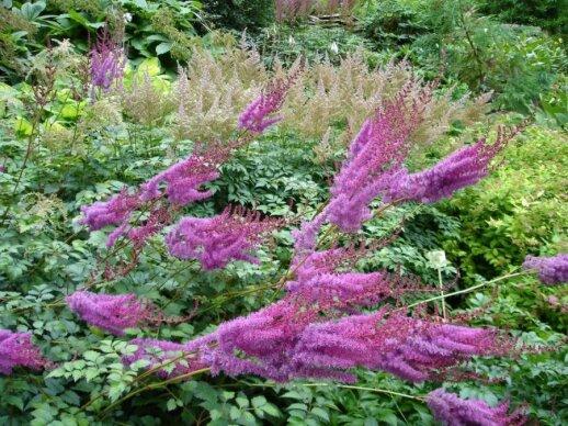 Tvenkinio ir kūdros apželdinimui būtini augalų tipai