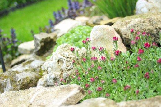 Alpinariumo įrengimas: vieta, dirvožemis bei augalai