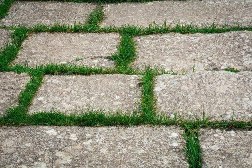 Kiemo grindinys iš trinkelių: kaip pasirinkti ir prižiūrėti?