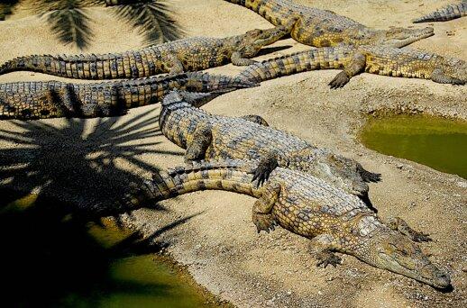 """Žiauriausi <strong>GROŽIO RITUALAI</strong>: valgė krokodilų mėšlą, laužė kojas, <span style=""""color: #ff0000;"""">skalavo burną šlapimu</span>"""