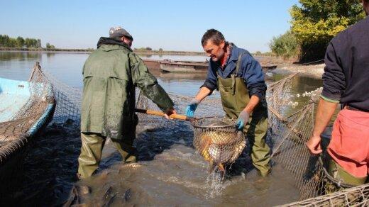 G. Mikolaitis mano, kad jei neliks žvejų verlsininkų labai daug žuvies žus