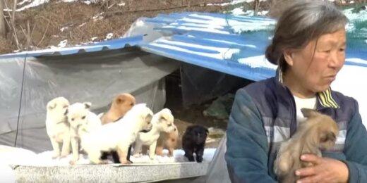 Moteris išgelbėjo šuniukus
