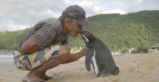 Pingvinas ir išgelbėtojas