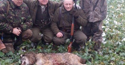 Šiaulių regione vilkų medžioklė jau baigta
