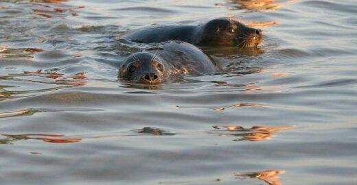 Kodėl reikia išsaugoti Baltijos jūrą?