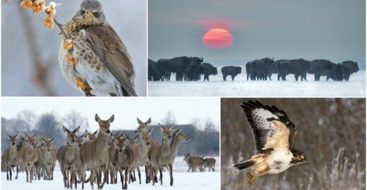 Lietuvos gamtos dienoraštis