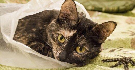 Kaip internetu nenusipirkti katės maiše?