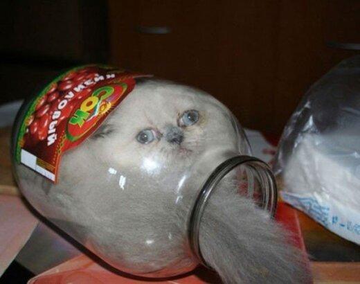 Įrodyta - katės iš tiesų yra skystis