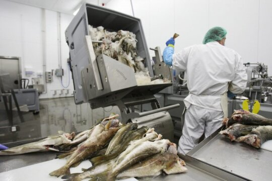 Žuvies gamybos cechas