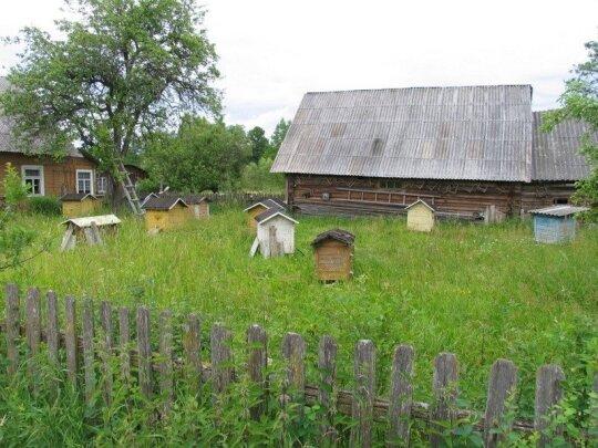 Musteikos kaime