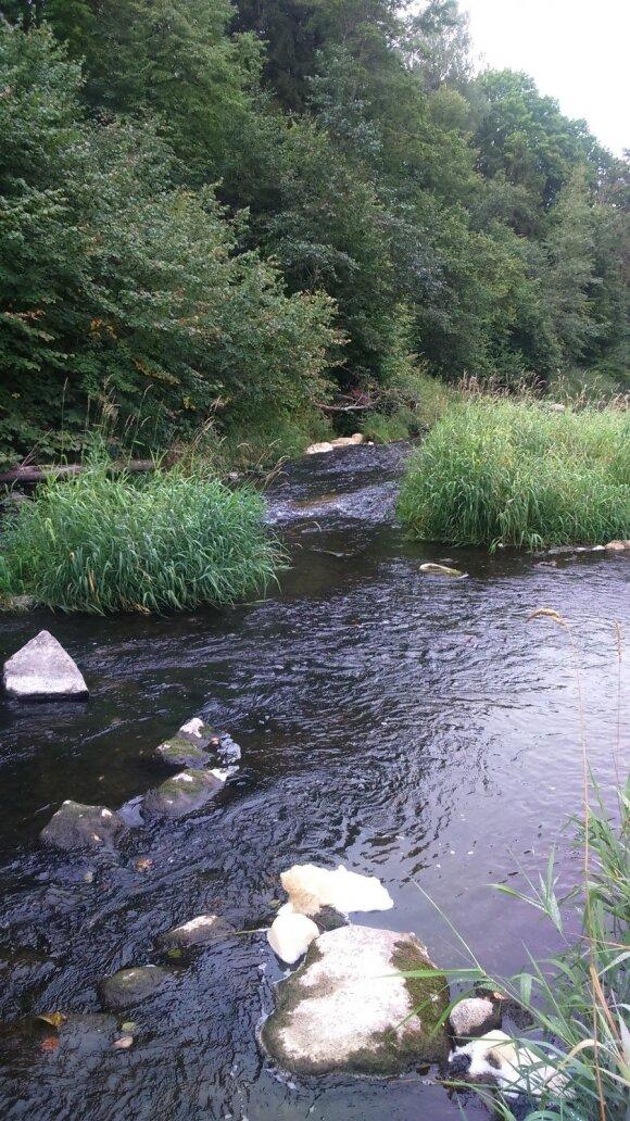 Minijos upėje sekmadienį pastebėti keli šimtai kritusių žuvų