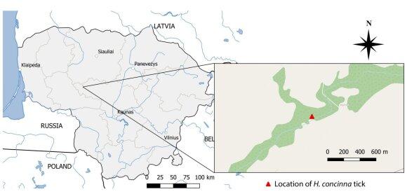 Lietuvoje aptikta nauja erkių rūšis