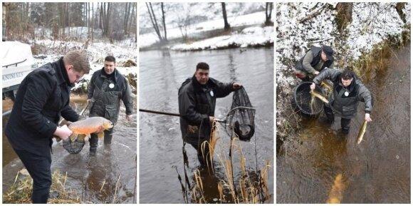 Upėtakiai paleidžiami į upę