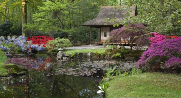 Vilniaus japoniškame sode žydės vandens lelijos