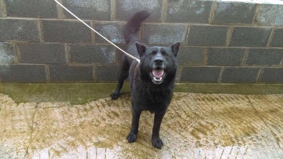 Neįtikėtina augintinio gelbėjimo istorija: Airijoje mirusio šeimininko šuo pasiekė Lietuvą tik tautiečių dėka