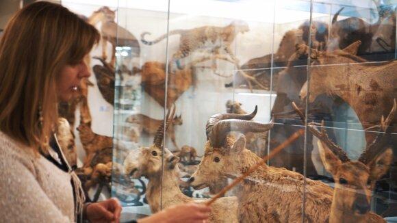 Vilniaus universiteto Zoologijos muziejus