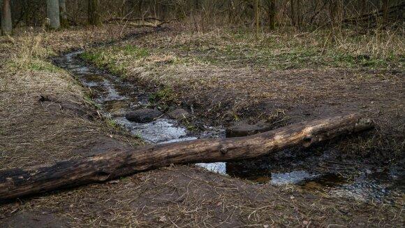 Žiobrikio upelis Kleboniškio miško parke