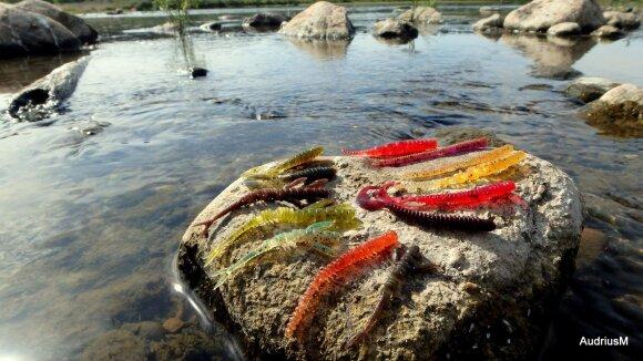 Audriaus mėgstamos masalų formos ir spalvos, skirtos karšiams gaudyti