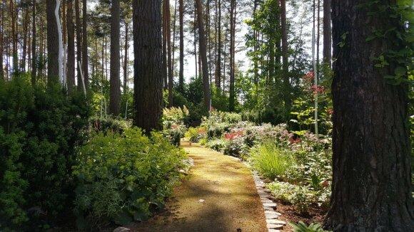 30 arų sklypas: sodas, iš kurio yra ko pasimokyti