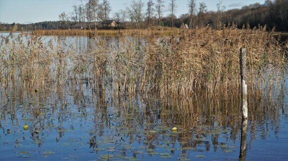 Bebrusų ežeras lapkritį