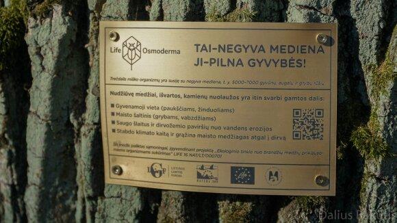 Ąžuolyno parkas Kaune