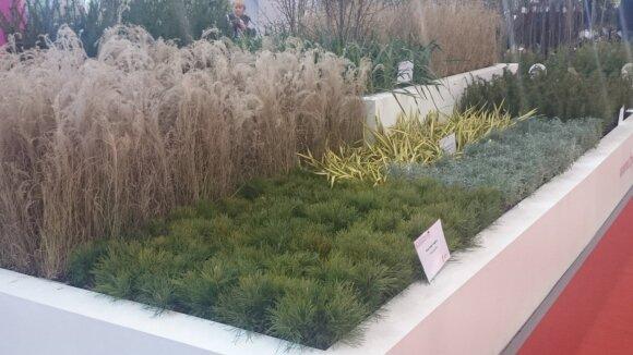 Dekoratyvinių žolių augintojų stendas.