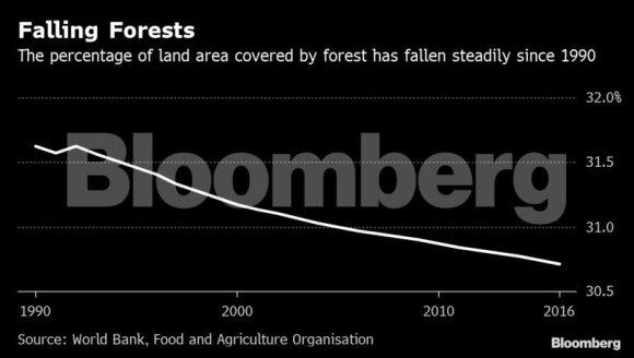 Europiečiai – miškų naikintojai: perka pernelyg daug ir nežiūri iš kur