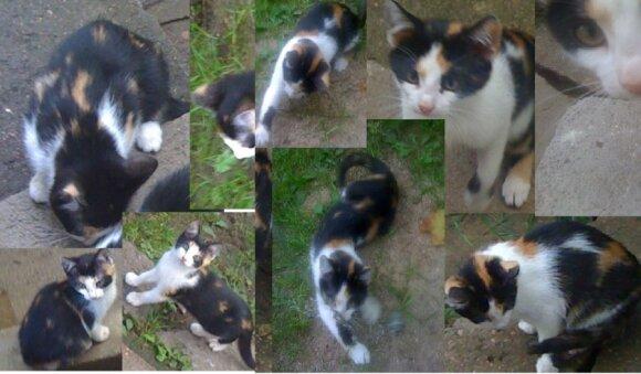 Katinėliai ieško namų