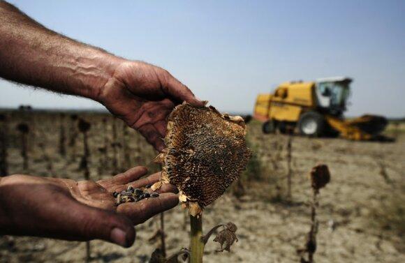 Rinkti ir kaupti sėklas taip pat gali būti uždrausta