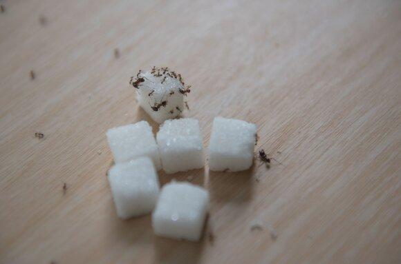 Kaip išvyti skruzdėles