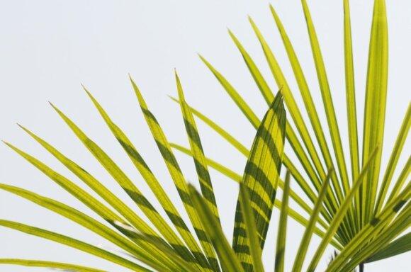 Naudingiausi kambariniai augalai: ne tik mažina įtampą, bet ir valo orą