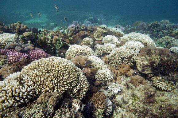 Piečiausias pasaulyje koralų rifas Lordo Howe salos lagūnoje