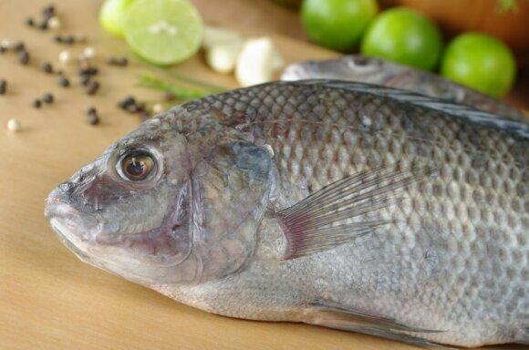 Lietuvoje tilapijas auginantis ūkininkas Aurimas: noriu sulaužyti mitą, kad tai nevertinga žuvis