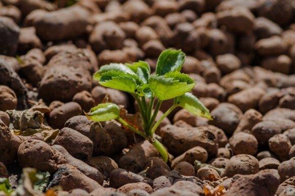 Kaip teisingai parinkti trąšas vaismedžiams, daržovėms ir vejai
