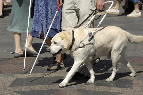 Šuo vedlys