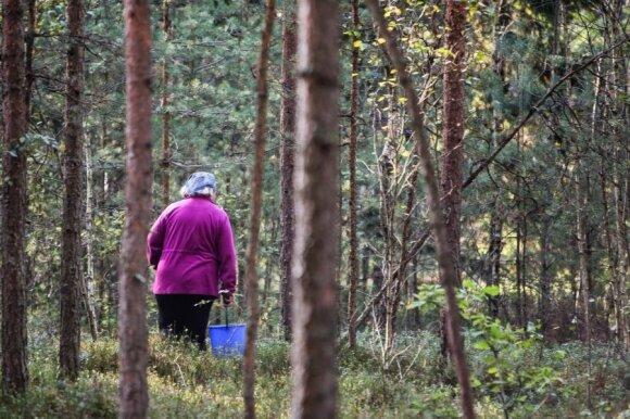 Grybautojai patraukė į mišką