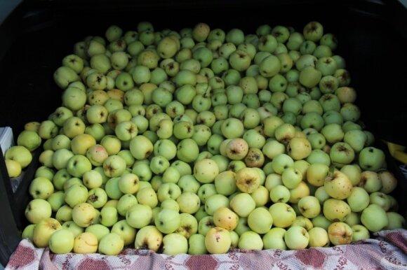 Valgote obuolį su žievele? Biomedicinos mokslų daktarė pateikė tyrimų išvadas apie lietuvių pamėgtus vaisius