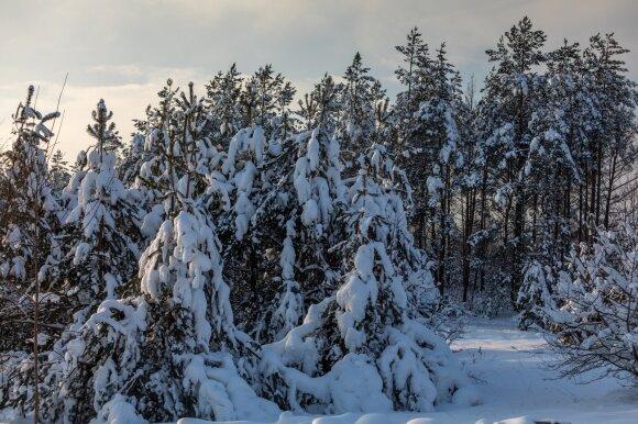 Gamtos mokslų daktaras apie tai, kas laukia mūsų miškų: bus keliamas triukšmas, esą parduoda Lietuvą švedams, bet kito kelio nėra