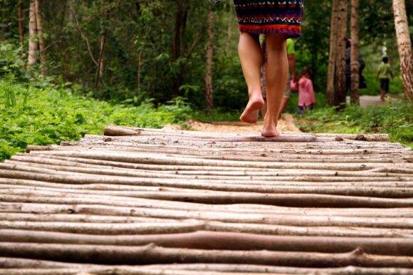 Pažintinis basų kojų takas
